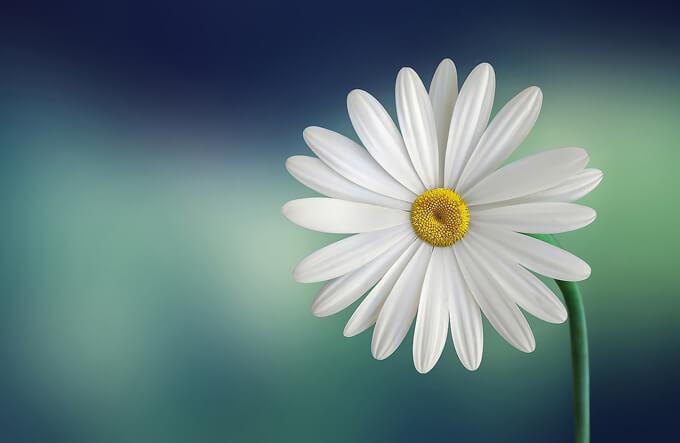 人事の役割はメンバーの「才能開花」